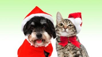 Holiday dogcatNR